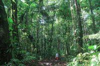 Activités outdoor : Randonnée sur le sentier de la maison de la forêt