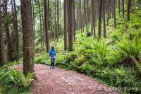 On traverse une très belle forêt