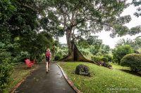 Promenade facile dans le jardin botanique de Deshaie