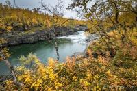 Couleurs d'automne à Abisko