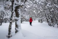 On marche sous les arbres dans la neige