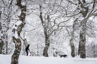 Passage d'un traineau à chiens dans la forêt