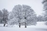 Les arbres sont bien recouverts de neige