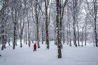Superbe forêt d'arbres enneigés