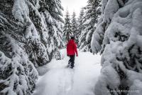 Paysage fantastique avec beaucoup de neige