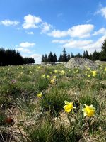 Activités outdoor : Visiter et d�couvrir le plateau de l'Aubrac en Aveyron