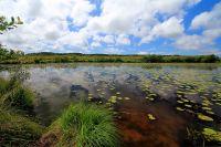 Activités outdoor : Réserve naturelle du Courant d'Huchet