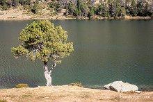 Arbre près du lac d'Aumar