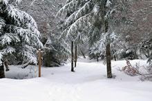 Randonnée dans la neige sur le sentier botanique de Laguiole
