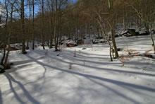 Dans le bois de Saint-Savin