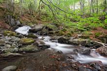 Forêt dans les Pyrénées