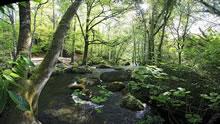 Forêt de Huelgoat en Bretagne