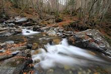 Photos de cascades dans une forêt des Hautes-Pyrénées