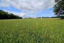 Balade dans la campagne en Dordogne