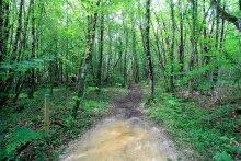 Balade en Dordogne