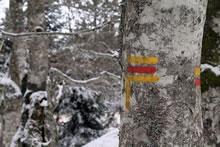 Sentier de randonnée en Aubrac