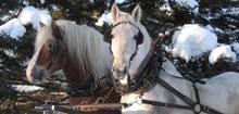 Randonnée équestre en traineau dans la neige