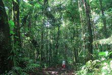 Randonnée sur le sentier de la maison de la forêt