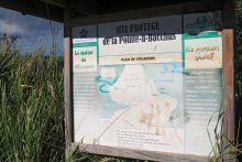 Site protégé de la Pointe à Bacchus