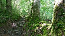 Dans la montée dans le bois