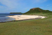 La plage recouverte d'exosquelettes
