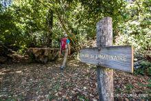 Sentier de l'imaginaire : la forêt magique