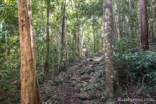 La randonnée commence dans une belle forêt