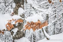 Gros plan sur quelques feuilles qui résistent à l'hiver