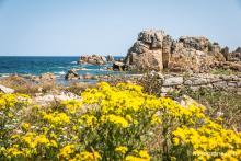 Balade au pays des Tors - sentier de découverte à Plougrescant