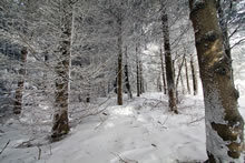 Neige en forêt sur le plateau de l'Aubrac