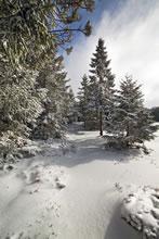 Aubrac sous la neige