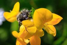 Macro insecte