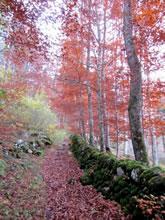 La Voie Romaine - Randonnée sur l'Aubrac - St Chély d'Aubrac