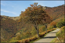 Route qui monte au col d'Aspin