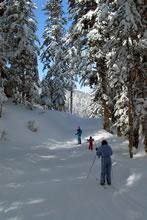 Ski de fond dans la forêt sur le domaine de Payolle