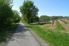 Balade en vélo sur la Voie Verte Roger Lapébie en Gironde