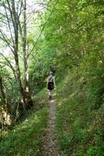 Début de la randonnée dans la forêt sur le tour de Sainte Croix du Mont