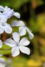 Une des nombreuses fleurs du Jardin Majorelle