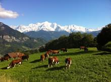 Massif du Mont Blanc: A Burzier, au dessus de Sallanches