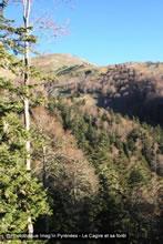Forêt de Cagire