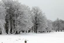 Premières neiges en Aveyron