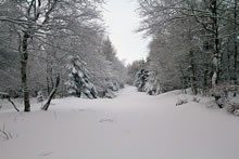 Sentier botanique de Laguiole