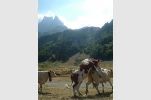 La vache! ça grimpe dur face au pic du Midi d'Ossau