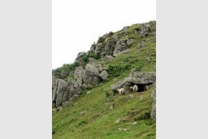 Brebis et vautours: lors de la randonnée au Mondarrain
