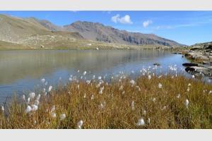 Lac Palluel vu de l'autre côté, avec des linaigrettes au premier plan