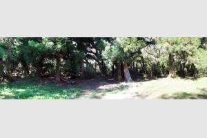Clairière dans la forêt de Bélouve