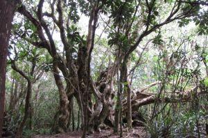 Végétation dans la forêt de Bélouve