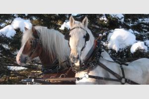 L'hiver au Québec - Randonnée équestre et traîneau à cheval dans la neige
