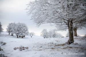 Allons marcher dans la neige poudreuse