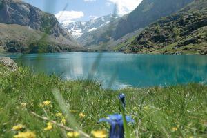 Fleurs au lac des Gloriettes